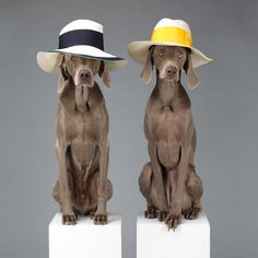 Acne Studios Spring/Summer 2013 Campaign photographed by William Wegman