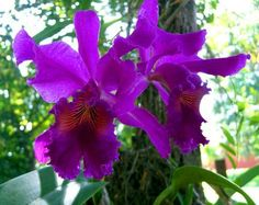 Purple Cattleya.....I've always told my Family, do not waste money on a casket spray....Just one purple cattleya orchid!  Says it all.