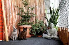 The Catio: Custom Patios for Cats — The New York Times