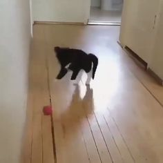 Sweety cat love playing - So Funny Epic Fails Pictures Funny Animal Videos, Funny Animal Pictures, Cute Funny Animals, Cute Baby Animals, Animals And Pets, Funny Cats, Grumpy Cat Christmas, Funny Parrots, Cat Behavior