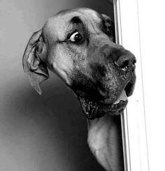 Cão está admirado com o que vê.