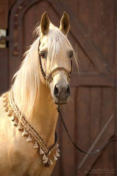 Fauna Was Thought Of As Sacred In Ancient Times. Folklore Has Often Flaunted Connections Between Divine Idols And Sublime Animals Beautiful Horse Pictures, Beautiful Arabian Horses, Most Beautiful Horses, Majestic Horse, Animals Beautiful, Horses And Dogs, Cute Horses, Pretty Horses, Horse Love