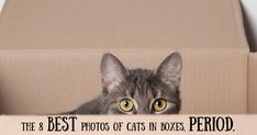 Curiosity didn't kill the cat, but it definitely got the cat stuck in a few boxes. Come see what our 8 favorite photos are and tell us if we're missing one!