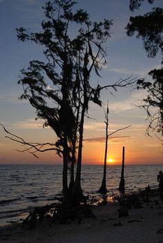 Cypress Sunset