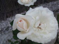 El significado de las flores: ¡Mensajes ocultos!