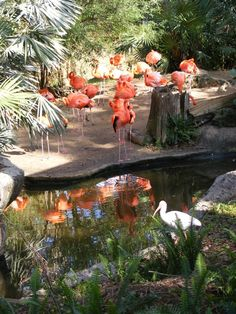 Tampa's Lowry Park Zoo, Birds of Beauty!