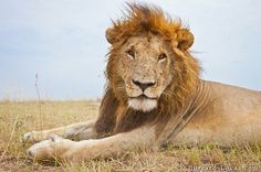 Taken with a robot camera; these make the wild animals so much closer - like portrait photography. Mesmerizing.