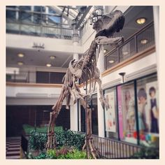 Dinosaur in the Whitgift Centre