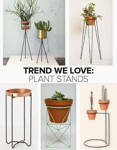 DIY Plant Stand Ideas for Indoor and Outdoor Decoration Potted Plants, Indoor Plants, Indoor Herbs, Indoor Gardening, Air Plants, Cactus Plants, Interior Plants, Interior Design, Plantas Indoor