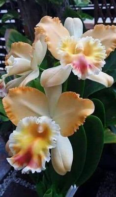 Beauty Of Orchids - Comunidade - Google More