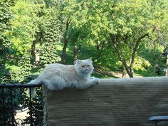 Sitting on the edge of the balcony