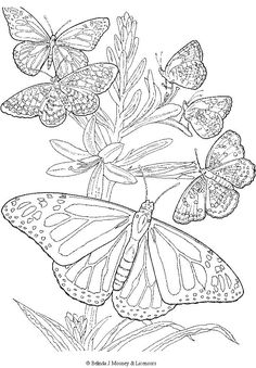 free printable adult butterfly coloring page these would be awesome for relief carving or wood burning templates - Advanced Coloring Pages Butterfly