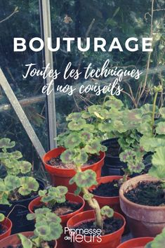 Le bouturage - tout savoir You are in the right place about Vegetable Garden trellis Here we offer you the most beautiful pictures about the Vegetable Garden diy you are looking for. Garden Trellis, Garden Planters, Herb Garden, Organic Gardening, Gardening Tips, Gardening Quotes, Vegetable Gardening, Different Plants, Garden Care
