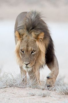 Λιοντάρια και γατάκια ιστοσελίδα dating