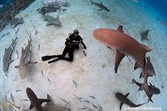 Richard Branson: Don't Turn Shark Encounter Into an Excuse to Kill More Sharks Shark Conservation, Life Under The Sea, Shocking News, Richard Branson, Shark Week, Ocean Life, Animal Rights, Deep Sea, Marine Life