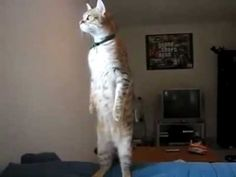 完璧に立ってるネコ