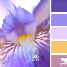 Iris color palette?