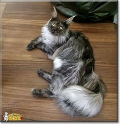 Thor, the Cat of the Day