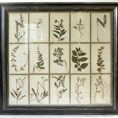 SDA Décoration - Indoor and Outdoor Collections | italian style herbarium