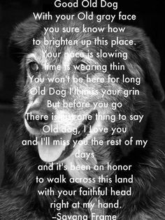 We go into this knowing that our time with our dogs is limited.  They have all been precious--