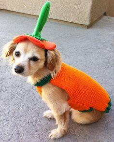 Custom Pumpkin Hat and Sweater Pet Halloween Costume.. $25.00, via Etsy.