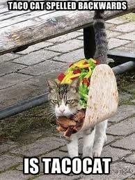Taco cat spelled backwards is tacocat