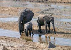 adventure travel trip to Kenya