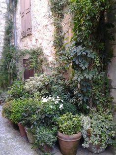 Lots of potted plants! Rue st Paul de Vence Lots of potted plants! Back Gardens, Small Gardens, Outdoor Gardens, Love Garden, Dream Garden, Balcony Garden, Garden Pots, Potted Plants, Foliage Plants