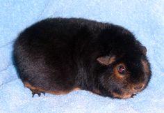 Briar Patch Caviary - gorgeous Tan Teddy!