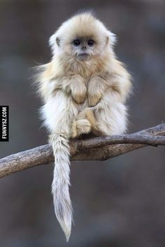 Awesome Monkey