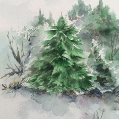 #pinetree #tree #painting #watercolor #watercolour #art #green #plants #winter #christmas #paint #greentree #instapicture #instaart #landscape #canotstop #etsy
