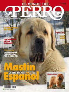 El Mundo del Perro nº 398 - Mayo 2013 , dedicado al Mastín Español. http://www.elmundodelperro.net