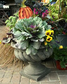 a Fall Container Garden on a Gardener Budget TreeHugger An example of the humble cabbage taking center stage in a fall-themed container garden.TreeHugger An example of the humble cabbage taking center stage in a fall-themed container garden. Fall Flower Pots, Fall Flowers, Container Plants, Container Gardening, Plant Design, Garden Design, Ornamental Cabbage, Fall Containers, Pot Jardin