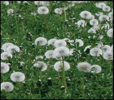 Jerry Baker Kick Wicked Weeds Out of Your Beds! Garden Yard Ideas, Garden Fun, Garden Care, Lawn And Garden, Garden Landscaping, Garden Weeds, Lawn Care, Amazing Gardens, Problem Solving