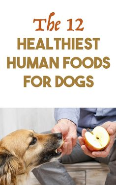 The 12 Healthiest Human foods for dogs http://iheartdogs.com/12-healthiest-human-foods-for-dogs/