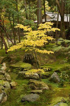 Kyoto 2010 | Allan Mandell