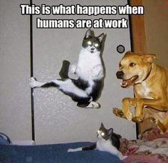 Funny animal pictures of funny cats and dogs. Funny animal pictures with captions. Funny Friday Memes, Friday Humor, Funny Cat Memes, Funny Cat Videos, Funny Animal Pictures, Funny Animals, Cute Animals, Funniest Animals, Hilarious Pictures