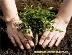 """Hàng năm, Chính phủ Indonesia phát động """"Chương trình cây xanh quốc gia"""" với mục tiêu trồng 1tỷ cây xanh trên phạm vi cả nước. Chương trình này nhằm nỗ lực bảo tồn đa dạng sinh học, bảo vệ môi trường và chống biến đổi khí hậu."""