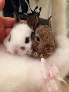 Cuddly bunny loves:)