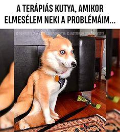 So manche Lehrer, die sic - Humor Lustiger Funny Shit, Funny Animal Memes, Stupid Funny Memes, Cute Funny Animals, Funny Relatable Memes, Funny Animal Pictures, Funny Cute, Funny Photos, Funny Dogs