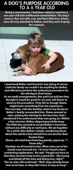 A dog's purpose, according to a 6 year old