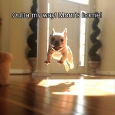 out of the way mom is home cute little dog is excite   Funny Pictures And Quotes Of The Week - 50 Pics #DogQuotes