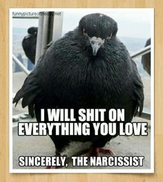 I will shit on everything you love. Sincerely, the narcissist.