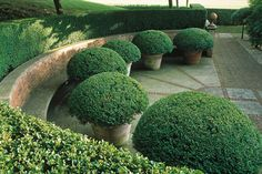 Create year-round colour, structure and drama with neatly clipped potted topiary domes with evergreen boxwood via Boxwood Garden, Garden Trees, Lawn And Garden, Garden Pots, Boxwood Topiary, Formal Gardens, Outdoor Gardens, Landscape Design, Garden Design