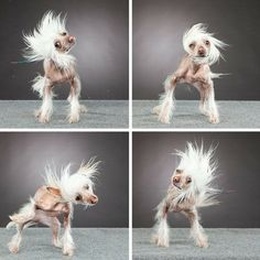 I whip my hair back n forth!
