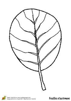 coloriage dessin feuilles automne aulne - Dessin De Feuille