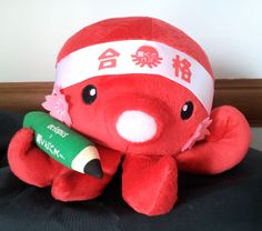 Amakusa octopus hoping to be ready for graduate