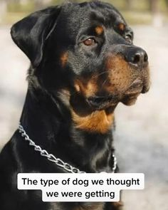 Crazy Funny Videos, Funny Dog Videos, Funny Video Memes, Dog Memes, Cute Animal Videos, Cute Animal Pictures, Funny Videos Of Animals, Dog Pictures, Baby Animals Super Cute