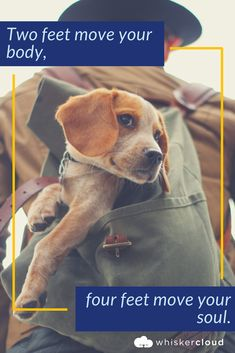 Are you interested in a Beagle? Well, the Beagle is one of the few popular dogs that will adapt much faster to any home. Whether you have a large family, p Cute Beagles, Cute Puppies, Cute Dogs, Dogs And Puppies, Doggies, I Love Dogs, Puppy Love, Cute Senior Pictures, Dog Pictures
