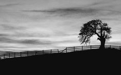 Lonesome by mojaverockyphotos on Etsy
